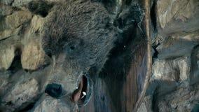 被充塞的棕熊 克拉斯诺亚尔斯克地区 西伯利亚 莫斯科 全景 股票录像