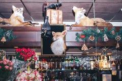 被充塞的狐狸 免版税库存照片