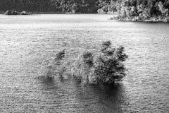 被充斥的树在湖 免版税图库摄影