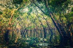 被充斥的树在美洲红树雨林里 免版税库存图片
