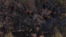 被充斥的森林区域顶视图  股票视频