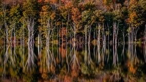 被充斥的森林在长的池塘铁器国家公园, NJ 库存照片