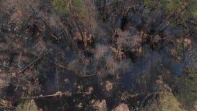 被充斥的森林顶视图  影视素材