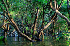 被充斥的森林 库存照片
