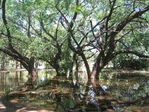 被充斥的森林 免版税库存照片