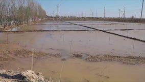 被充斥的种植园领域在乌兹别克斯坦 股票视频