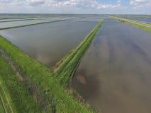 被充斥的稻米 种植在f的米农业方法  图库摄影