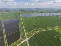 被充斥的稻米 种植在f的米农业方法  免版税图库摄影