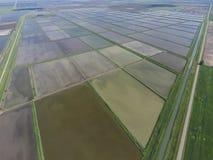 被充斥的稻米 种植在f的米农业方法  库存照片