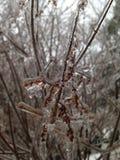 被冰的分行 库存照片