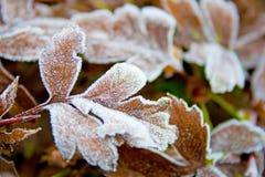 被冰的叶子 图库摄影