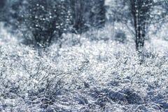 被冰的树和草 库存图片