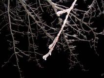 被冰的树枝在晚上 库存图片