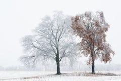 被冰的树 免版税库存图片
