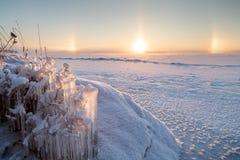 被冰的植物和光晕在冬天 库存照片
