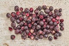 被冰冻干燥的ekderberries 免版税库存图片