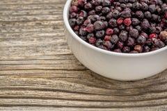 被冰冻干燥的ekderberries 库存图片
