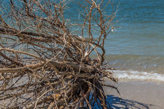 被冲上岸的漂流木头 免版税库存图片