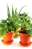 被分类的室内植物 免版税库存照片