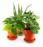 被分类的室内植物 免版税库存图片