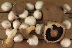 被分类的蘑菇 免版税库存照片