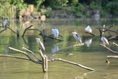 被分类的鸟在树枝 免版税图库摄影