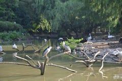 被分类的鸟在树枝 库存照片