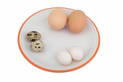 被分类的鸡蛋 库存图片