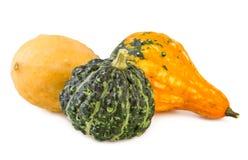 被分类的南瓜装饰五颜六色的各种各样的金瓜装饰物 免版税库存图片