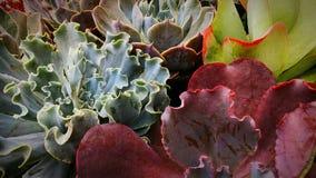 被分类的多汁植物 免版税库存照片