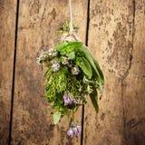 被分类的新鲜的草本花束garni  免版税库存图片