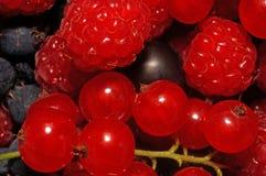 被分类的莓果(莓,黑和红浆果)作为backgr 免版税库存照片