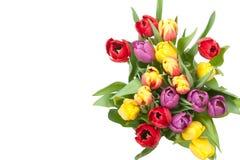 被分类的郁金香花束 背景查出的白色 顶视图 免版税图库摄影