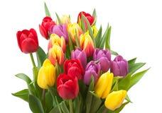 被分类的郁金香花束 背景查出的白色 免版税图库摄影