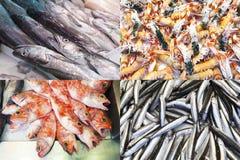 被分类的鱼和海鲜构成 免版税库存图片