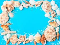 从被分类的贝壳和珊瑚的框架在蓝色背景 免版税库存照片