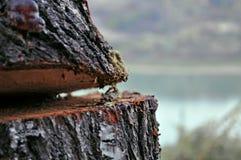 被切开的木头片断与湖的在背景中 免版税库存照片