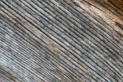 被切开的木头纹理,树干 库存照片