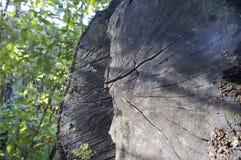 被切开的木头细节  免版税库存照片