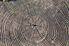 被切开的树干徒升  免版税库存照片