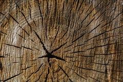 被切开的树干木纹理 库存图片