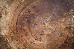 被切开的树干木纹理 图库摄影