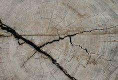 被切开的树干木纹理 库存照片