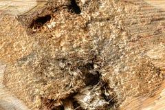被切开的树干木纹理 免版税库存照片