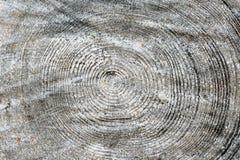 被切开的树干木纹理 免版税库存图片
