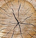 被切开的树干老木纹理  免版税库存图片