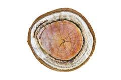 被切开的树干自然木纹理与木的年轮的 库存照片
