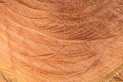 被切开的树干自然木纹理与木的年轮的 免版税库存图片