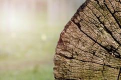 被切开的树干,特写镜头木纹理  免版税库存照片