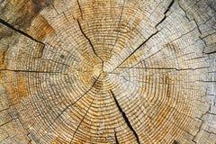 被切开的树干,特写镜头木纹理  库存照片